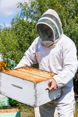 Male Beekeeper Carrying Honeycomb Box At Apiary