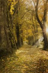 Eichenallee mit Herbstfärbung und Sonne