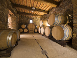oak wine barrels in winery cellar