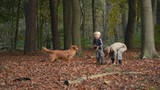 children playing with autumn leaves and dog in forrest