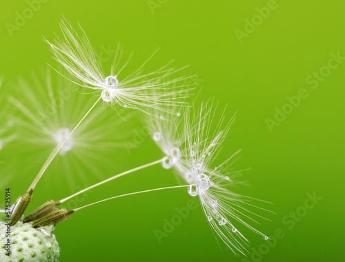 Spoed canvasdoek 2cm dik Paardebloemen en water dandelion seeds