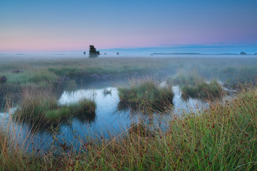 bog during summer sunrise