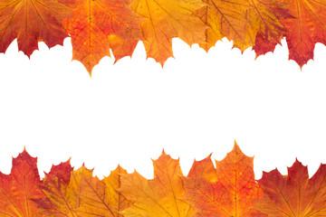Herbstlaub - weißer Hintergrund