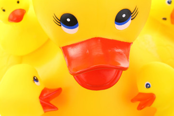 Yellow mother and children rubber ducks closeup
