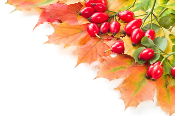 Rose hip fruit with autumn leafs,
