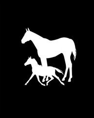 mare and colt in white over black