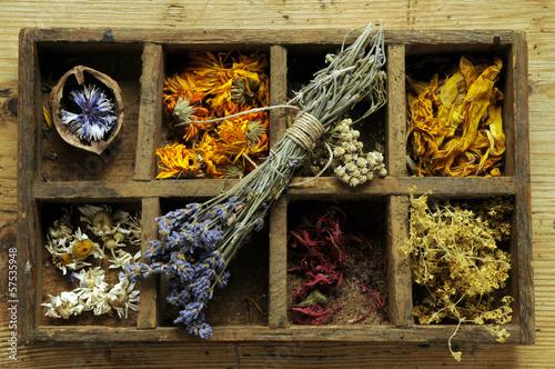 Tuinposter Lavendel 57535948