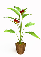 House Plant with Red Flowers