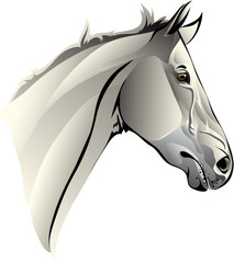 vector image of the head of a thoroughbred horse