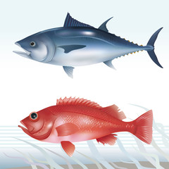 Tuna and ocean perch. Vector illustration.