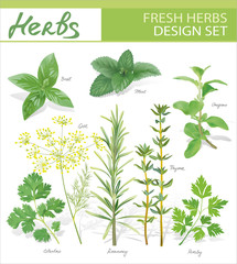 Fresh herbs. Vector design set.