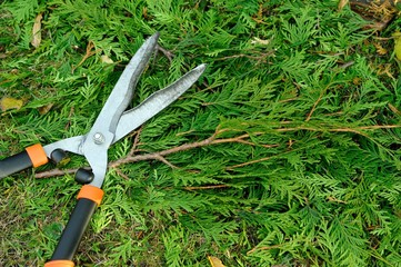 Pruning bushes