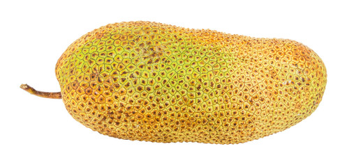 Artocarpus integer, commonly known as cempedak fruit