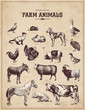 farm animals - 57548943