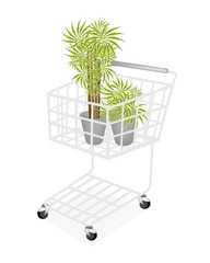 Beautiful Dracaena Plants in A Shopping Cart