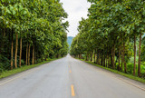 Countryside road with Teak trees