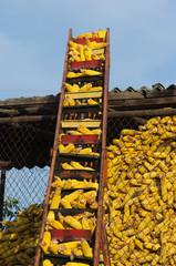 Elevator for corncob in granary