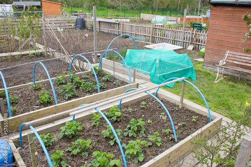 Allotment garden with raised beds