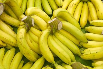 Rows of ripe yellow bananas