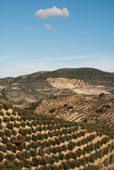 Spanish landscape outside Olvera, Spain