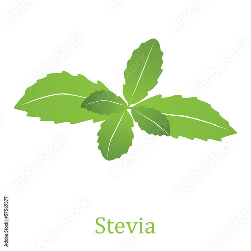 Stevia rebaudiana (vector illustration)