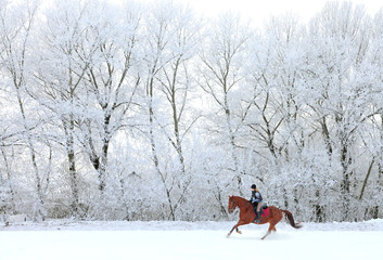 Woman and her horse cantering in fresh snow