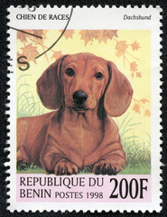 stamp printed in Benin showing Dachshund