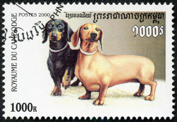 stamp printed by Cambodia, shows dog