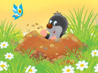 little mole digging a burrow