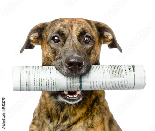 Fotobehang Dragen dog carrying newspaper. isolated on white background