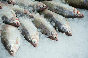 Fresh fish on iced market display, horizontal shot