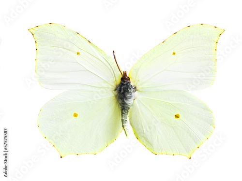 real colorful butterfly isolated in white background