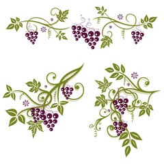 Weinreben, Ranke, Weinblätter, Weintrauben