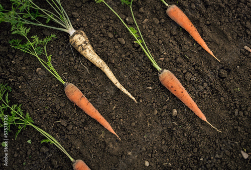 Parsley and carrots.
