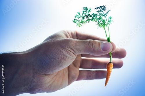 Tiny carrot