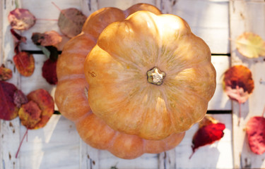 Autumn harvest of pumpkins. halloween decoration