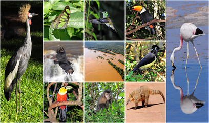 a collage made from Iguazu National park pictures.