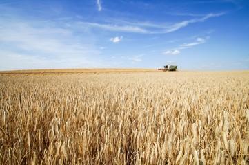 Getreideernte, Mähdrescher