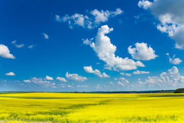 Yellow rapeseed field and clouds