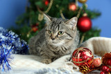 Cat in celebratory tinsel on Christmas tree background