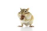 アーモンドを食べるシマリス