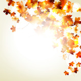 Maple autumn leaves background. EPS 10