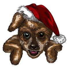 Christmas dog color