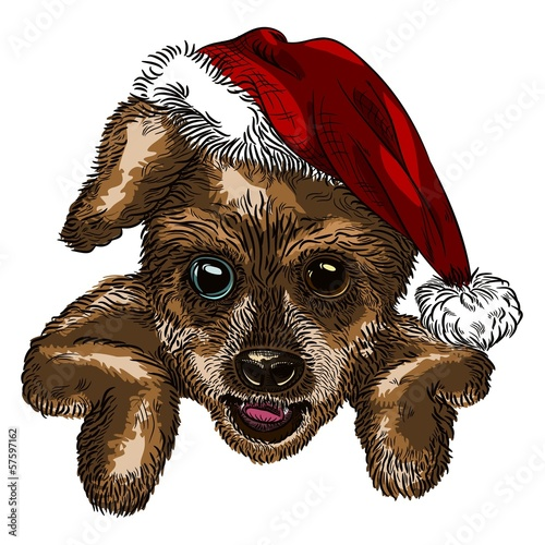 Christmas dog color