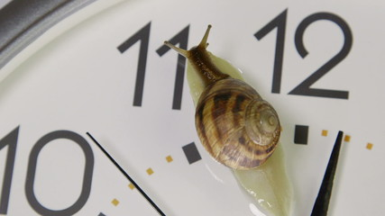 Snail crawling across face of clock