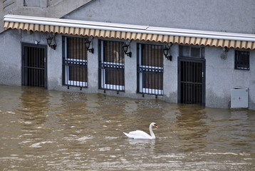 flooded restaurant with Swan