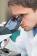 Scientific researcher using microscope in the laboratory