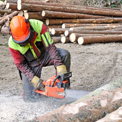 forestry worker - wood cuter