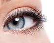 Beauty female eye with curl long false eyelashes