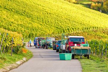Grape Harvest - Weinlese im Herbst